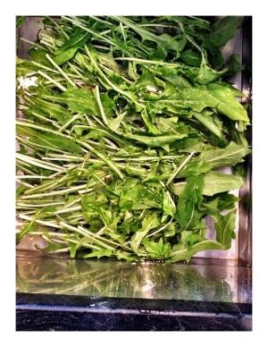 PureSense Health - Dandelion Greens 1